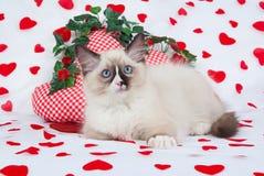 Chaton de Ragdoll dans le thème de Valentine Photo stock