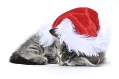 Chaton de Ragdoll utilisant un chapeau de Santa Photographie stock