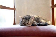 Chaton de sommeil image libre de droits