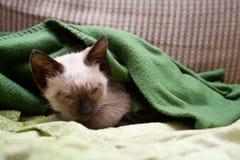 Chaton de sommeil Images stock