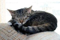 Chaton de sommeil. Photo libre de droits