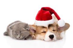 Chaton de sommeil et chiot de Pembroke Welsh Corgi avec le chapeau de Santa I Photo libre de droits