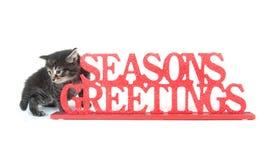 Chaton de tabby et signe mignons de salutations de saisons Image stock