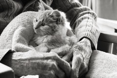 Chaton de thérapie d'animal familier Image stock
