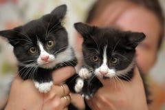 Chaton deux noir et blanc Photos libres de droits