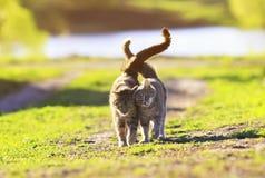 Chaton deux rayé mignon marchant sur l'herbe verte à côté de et les soins Photographie stock libre de droits
