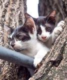 Chaton deux sur l'arbre Photographie stock