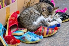 Chaton dormant sur les pantoufles turques au bazar grand Images libres de droits