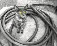 Chaton doux avec les yeux jaunes Photo libre de droits