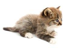 chaton drôle Photographie stock libre de droits