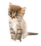 chaton drôle Images libres de droits