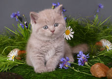 Chaton en fleurs photo stock
