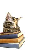 Chaton en sommeil sur de vieux livres Images libres de droits