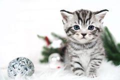 Chaton et arbre de Noël rayés, boules Image stock