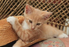 CHATON ET CHAPEAU DE PAILLE ROUGES SUR LE BANC Photo stock