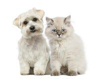 Chaton et chien Photo stock