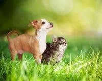 Chaton et chiot dans la longue herbe verte Images libres de droits