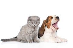 Chaton et chiot de baîllement de chien de basset ensemble D'isolement sur le blanc Image libre de droits