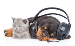 Chaton et chiot de sommeil écoutant la musique sur des écouteurs D'isolement sur le blanc Image libre de droits
