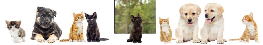 Chaton et chiot Labrador Photos stock