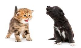 Chaton et chiot pleurants Image stock