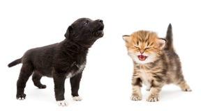 Chaton et chiot pleurants Photo stock
