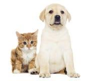 Chaton et chiot rouges drôles Photo libre de droits