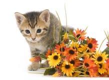 Chaton et fleurs Photographie stock libre de droits