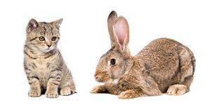 Chaton et lapin mignons Photographie stock