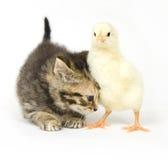 Chaton et nana de chéri Photo libre de droits