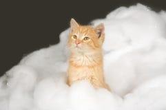 Chaton et neige d'article truqué image libre de droits