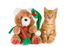 Chaton et ours de nounours, arrangement de Noël Photo stock