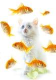 Chaton et poissons photo stock