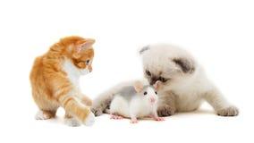 Chaton et rat de bébé Image libre de droits