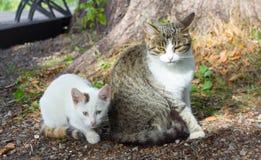 chaton et sa mère images libres de droits