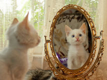 Chaton et un miroir Photos stock