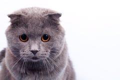 Chaton gris photographie stock