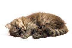 Chaton gris Image libre de droits