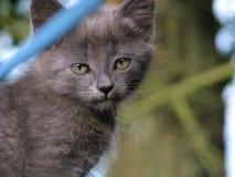 Chaton gris Photographie stock libre de droits