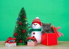 Chaton gris adorable sautant hors d'un cadeau de Noël photo libre de droits
