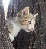Chaton gris et noir mignon sur l'arbre Images libres de droits