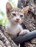 Chaton gris et noir mignon sur l'arbre Photo stock