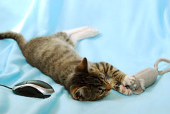 Chaton jouant avec deux mouses Photographie stock libre de droits
