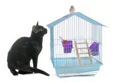 Chaton jouant avec l'oiseau Photo libre de droits