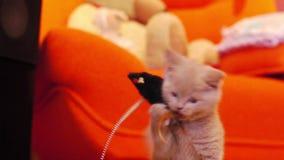 Chaton jouant avec une souris de jouet clips vidéos
