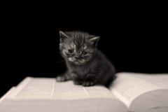 Chaton lisant un livre Photos libres de droits