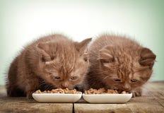 Chaton mangeant des aliments pour chats images libres de droits