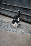 chaton mignon à l'air seul sur la vieille rue de ville Photo libre de droits