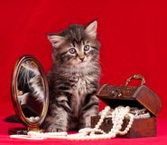 Chaton mignon Photo stock