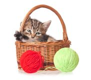 Chaton mignon Photos stock